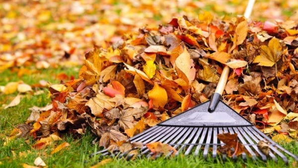 Easy Autumn Gardening Tips