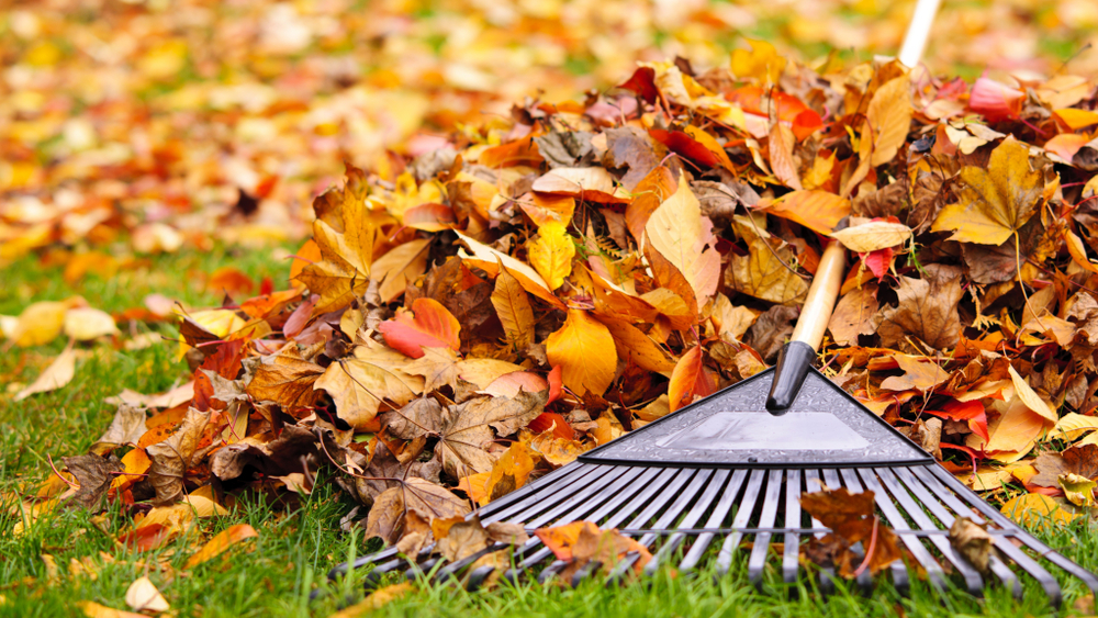 Easy Autumn Gardening Tips